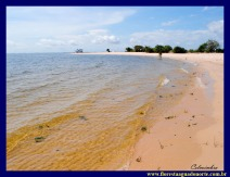Praia Maria Jose floresta agua norte amazonia celcoimbra 1